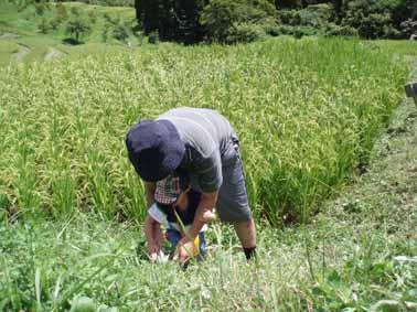 親子で草刈