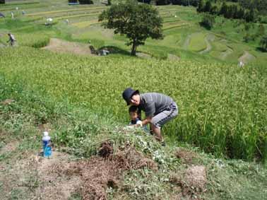 親子で草刈2