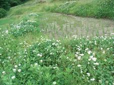 初夏の畦に生い茂る草花